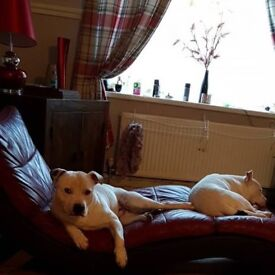 Got 2 dogs I would like to rehome