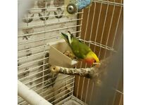 Love bird with large cage and food