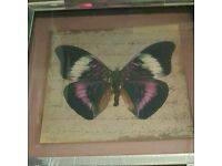 Purple Butterfly Picture