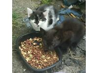 Kittens for sale (Stoke on Trent)