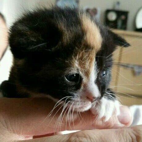 Kittens *only 1 left *