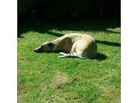 Dog walking in Cirencester