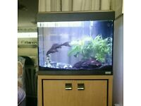 Free pleco fish