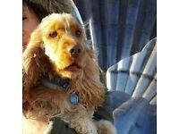 Loving Dog Walker