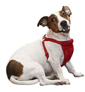 NEW: Small Comfort Harness  - Red