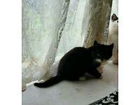 Beautiful kitten female