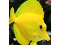 Marine aquarium livestock need a good home
