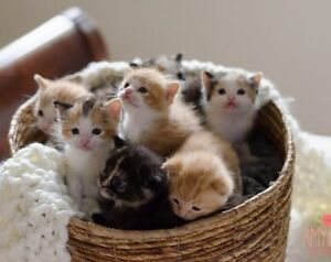 We are Looking for a new Kitten to add to our loving family Kitchener / Waterloo Kitchener Area image 1