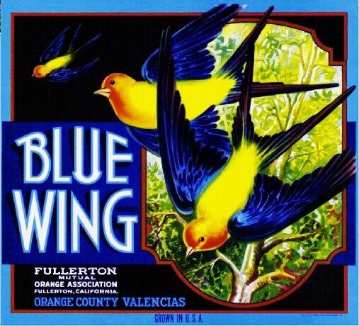 Fullerton Blue Wing Robin Birds  Orange Citrus Fruit Crate Label Art Print