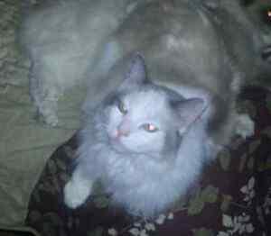 Please help us find our indoor cat Jaspurr in the Bentley area St James Victoria Park Area Preview
