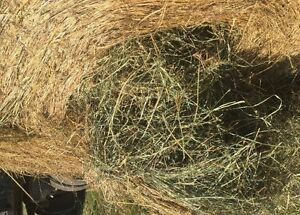 Hay and Oats