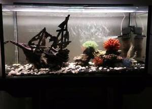 Fish tank - large Caravonica Cairns City Preview