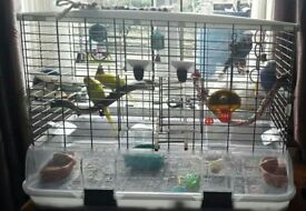 3 hand tame budgies and large vision cage for sale