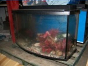 fish tank and all accessiores
