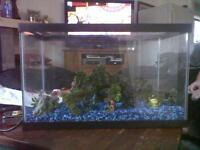 Fish Tank with box of stuff and heat lamp