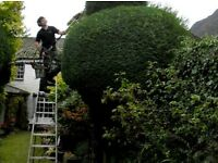 Oakmont tree Service licenced and insured tree surgeons
