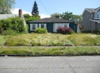 Need help bringing your lawn back ?