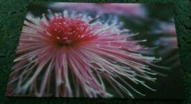 Pretty flower canvas