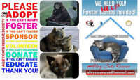 ALLEY CATS RESCUE