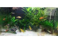 Fish tank (aquarium) with all equipment