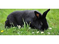 One friendly black and white rabbit