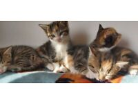 Six adorable kittens for sale