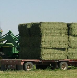 LOOKING FOR: HAY large squares suitable for horses. Must deliver