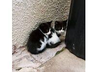 4 black & white Kittens