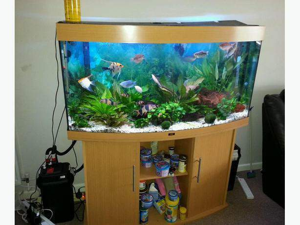juwel vision 260 4ft fish tank full setup with cabinet and. Black Bedroom Furniture Sets. Home Design Ideas
