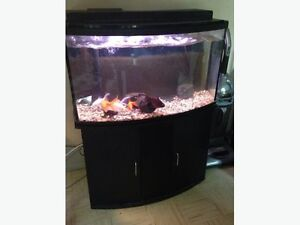 45 gallon aquarium with filter and stand (KIT)