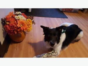 Fun and Positive Puppy class begins Mon, Dec 12 - 8 to 8:45pm Regina Regina Area image 4