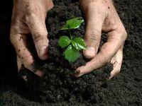 Natures Way Gardening - Reliable Gardening Service