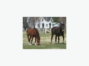 $350 · BAJA Ridge - Horse Boarding available