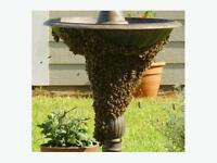 Oceanside Honey Bee Swarm Removal Service