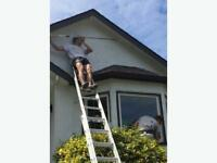 Experienced Painters for Hire