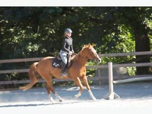 Horses for lease - Metchosin BC