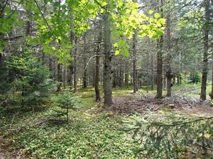 Lovely treed lot of aprox 22 acres near Tatamagouche colchester