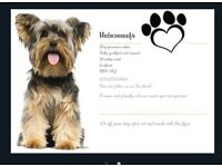 Hainswoofs dog grooming salon