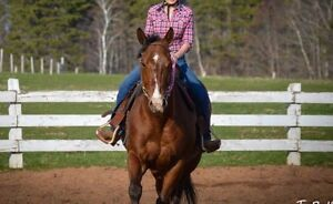 8 year old QH gelding for sale