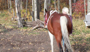 Equine Therapy and Body Work