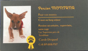 Pension Canines Montana