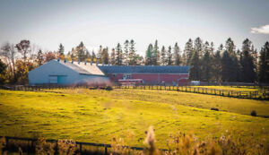 Horse Boarding Available Minutes off the 404/Aurora Road