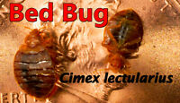 BED BUG,COCKROACHES,MICE CONTROL....SPECIAL OFF PRICE