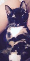 Free female kitten