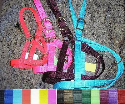 2 Calf Halters - Double Ply Nylon - Made In Usa