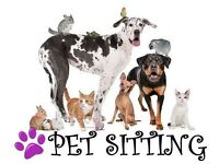 Dog Sitter Available , Belfast Area