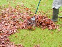 Raking leaves and yard clean up