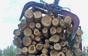 Looking for Birch logs