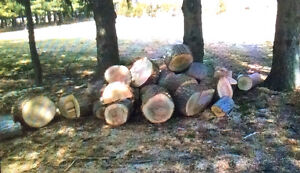 Seasoned Wood for firewood cut pieces