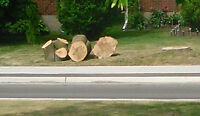 Free large pieces of wood from tree that died